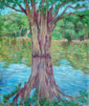 """Amazon Reflections: The Tree"""